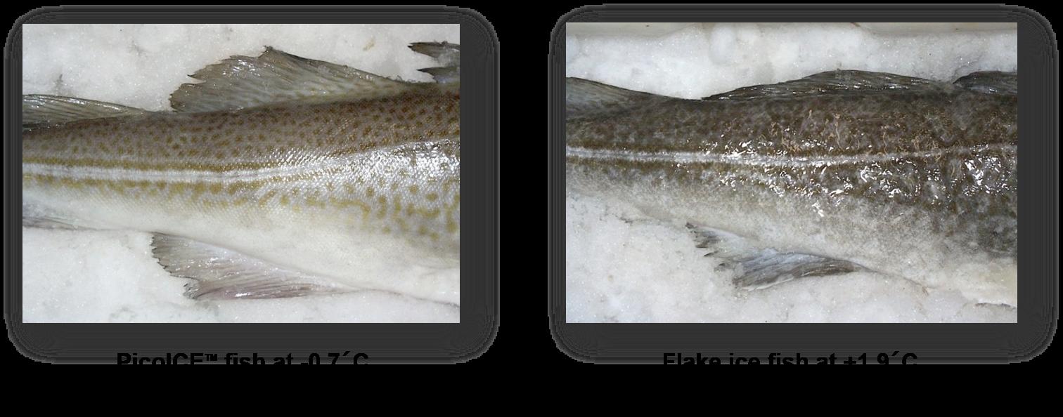 PicoICE Fish vs Flake ice Fish